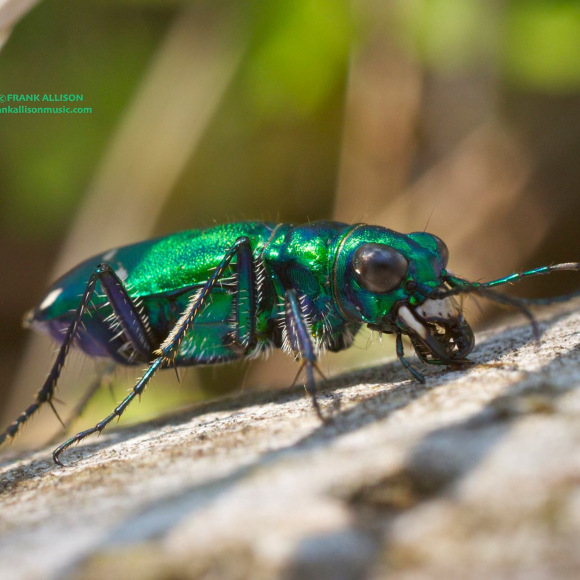 Photo of Insect by Frank Allison