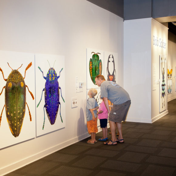 Small Wonders: Insects in Focus - insect photos - Steven Michaels install
